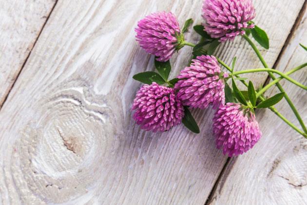 menopause hot flushes symptoms